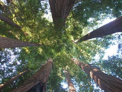 Tree Circle, Yosemite CA