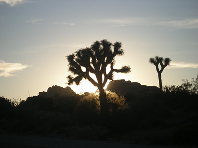 Joshua Tree Shadows, CA