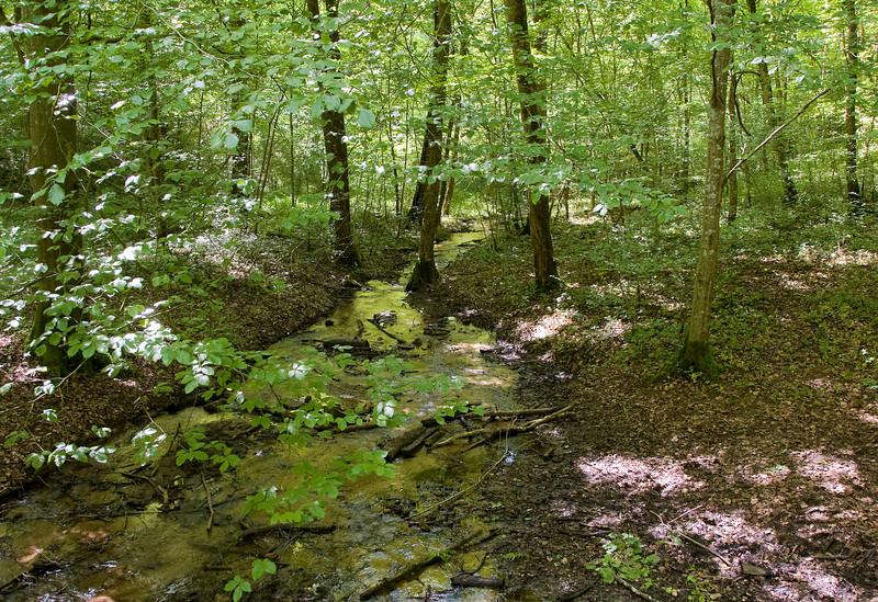 stroompje (Radru) in het bos in de buurt van Lamorteau