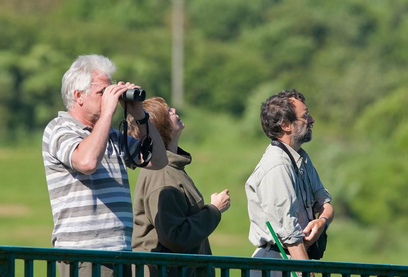 oeverzwaluwen kijken op de brug over de Chier