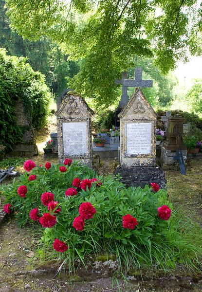 schone pioenrozen op de graven van het kerkhof van Marville