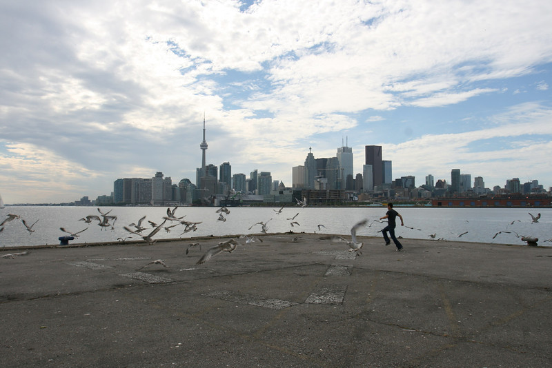 The Toronto city Skyline with Seagulls startled and flying away on a sunny summer day,