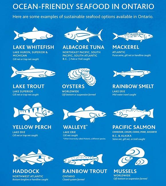 fish in Ontario