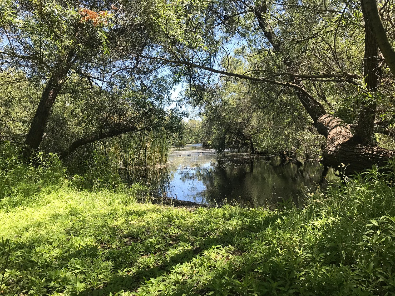 Madrona Marsh in Torrance California