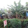 IMG_6734 - 2012-12-21 at 10-55-56