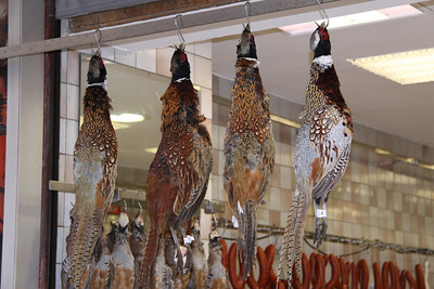 Butcher with fresh pheasant, rabbits and hare for sale