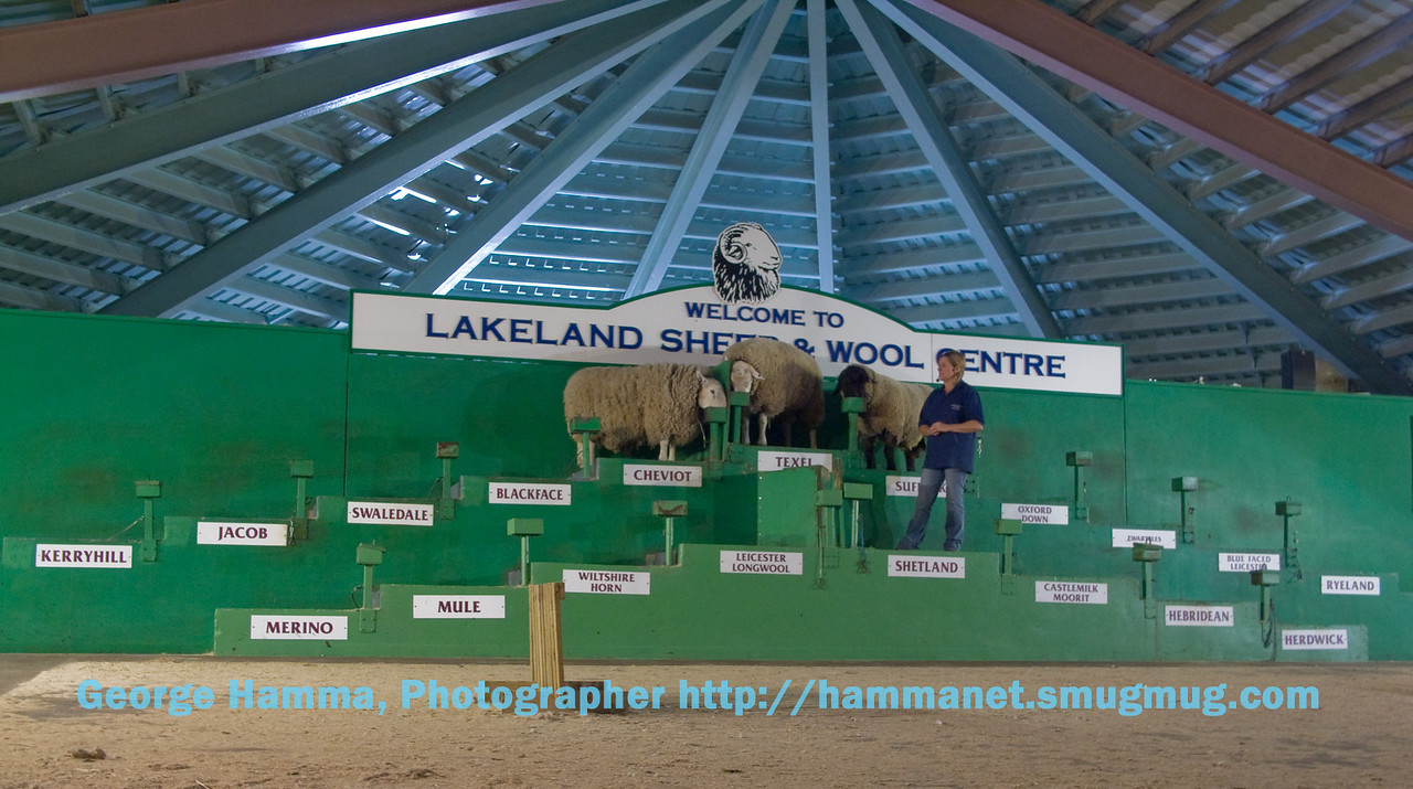 Being introduced to sheep breeds at Lakeland Sheep and Wool Centre near Keswick