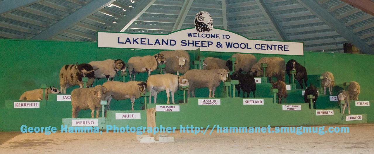 Sheep at Lakeland Sheep and Wool Centre near Keswick