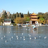 Kunming (昆明) - scene of a park inside the city.  Note that the presence of sea gulls in Kunming is most unusual, since Kunming is far away from the ocean.  They arrive from Russia to winter here.