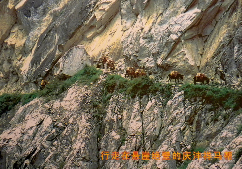 Kunming (昆明) - Photo on display inside a shopping center showing men and horses laden with burdens of tea traversing the Ancient Tea Horse Route (茶馬古道), transporting from Yunnan to Tibet and SE Asia.