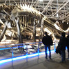 Kunming (昆明) - Museum and active dinosaur excavation site, named Dinosaur Valley, near Kunming.