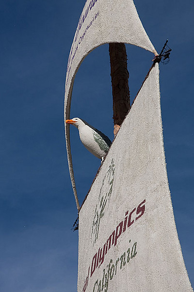 A seagull in the rigging