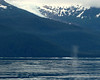 Glacier and whale