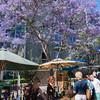 Purple trees! Really!
