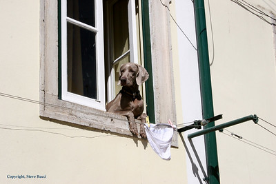 Guard dog - making sure nobody steals the tighty whities.  Near Sintra, Portugal.