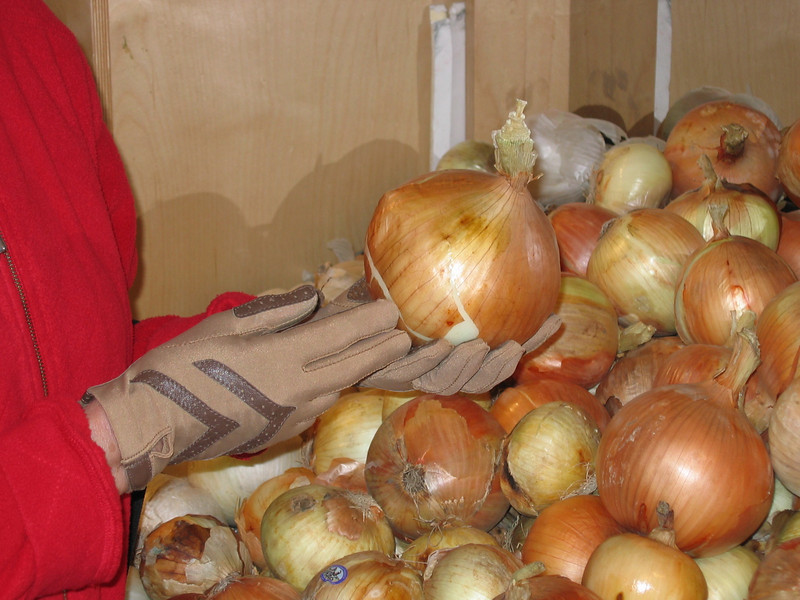 Im Winnipeg. we were able to de-trai for an hour. Found this produce market. Huge onions