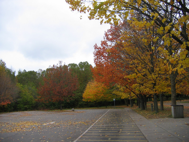 On the way to the Falls, we stopped at Niagara-on-the-Lake. This is changing leaves