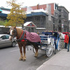 Horse and carriage ride to tour part of Montreal. Notice blanket on horse. Too cold for most i think