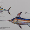 Funchal Fish Market - fish directory