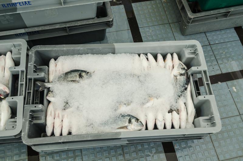 Funchal Fish Market - incoming fish