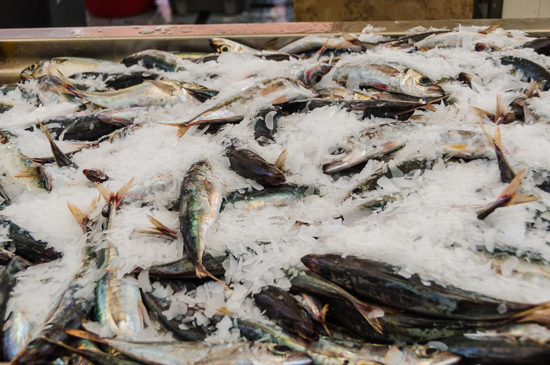Funchal Fish Market - Makerel