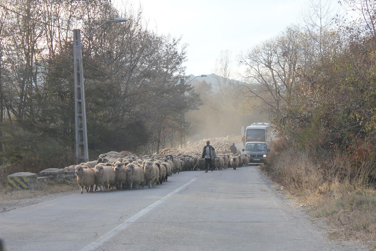 And sheep crossings too!