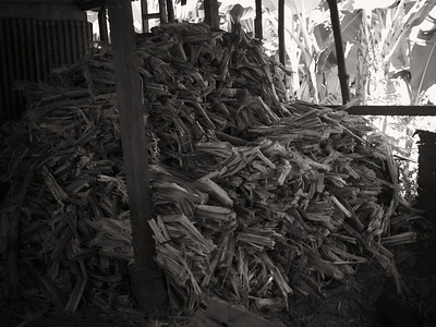 Quebradas, Costa Rica July 2013  The left over cane after being pressed.
