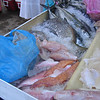 Fresh fish at tiangus (Thursday market) in La Penita. Center bottom are botete fish we used for fish tacos.