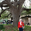The Alamo, Live Oak in Courtyard