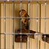Milford Lake KS Barn Owl