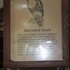 Milford Lake KS Hawk: Red Tailed Hawk Sign