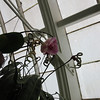 San Francisco Whoo-Ra with My Bro, Conservatory of Flowers