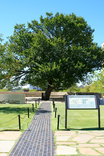 Survivor Tree