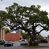 Oak Tree Right of Way