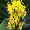 Sentry Tree Flower