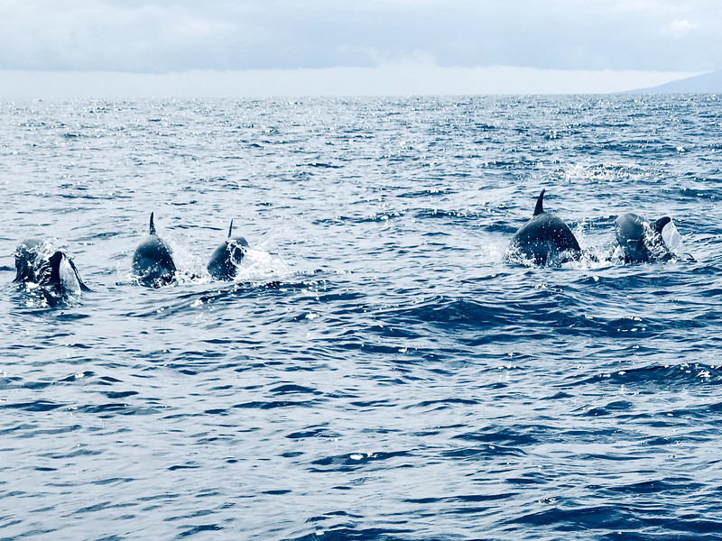The dolphins were more fun than watching whales!