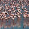 _DSC7348e Flamingos