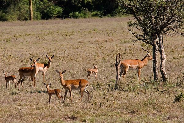 _DSC7688 & 84e Impala Family