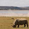 _DSC7747e Rhinocerous