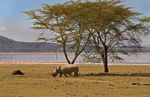 _DSC7737e Rhinocerous