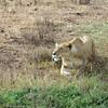 Stalking Warthogs