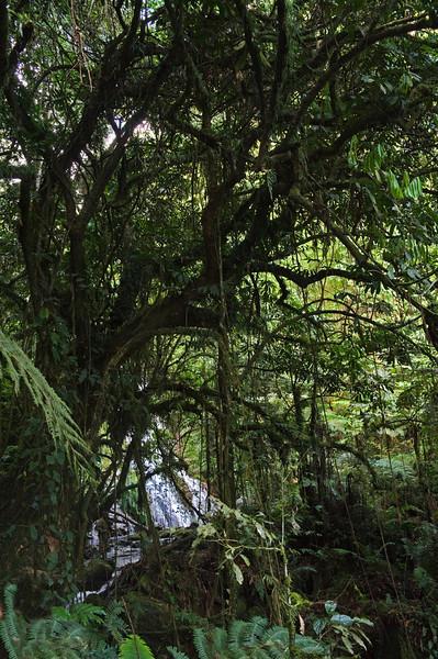_DSC4023e Forest