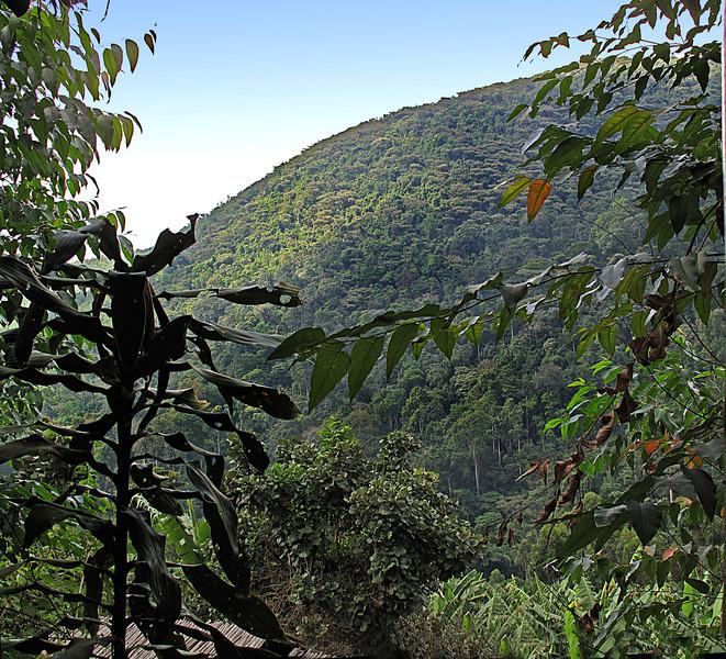 IMG_1689e Gorilla Hills