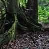 _DSC4046e Tree Trunk