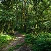 _DSC3963e Forest Path