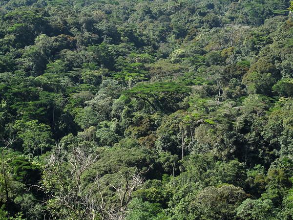 IMG_1739e Gorilla Valley