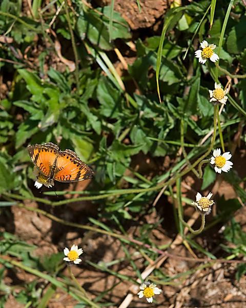 _DSC4859e Butterfly