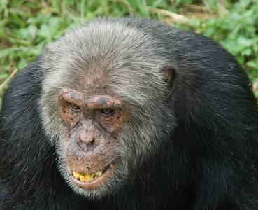 Nganba (Chimp) Island
