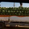_DSC2967e Banana Truck