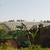 _DSC2991e Greenhouses